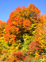 Colors of the Indian Summer in Quebec-TIFF