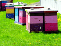 Colorful Beehives in a green field