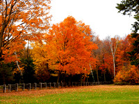 Golden and orange leave of autumn in a country side with a wood fence