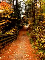 Pathway covered of colorful fallen leaves in Fall.