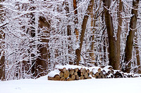Large outdoor wood pile in the winter