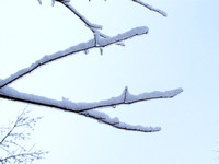 Close-up of twigs covered of ice-Stock photos