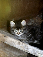 Little Taby kitten relaxing on a piece of wood.