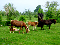 Group of horses in a field-TIFF